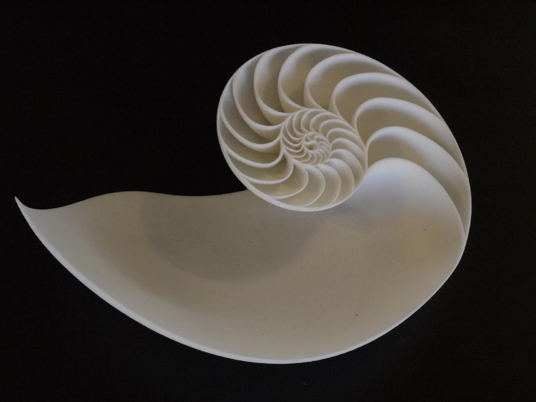 Nautilus Seashell 003.JPG