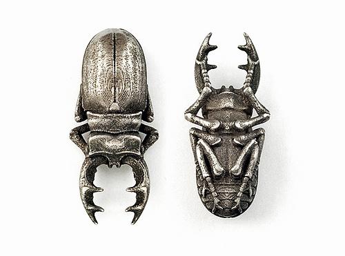stag_beetle.jpg